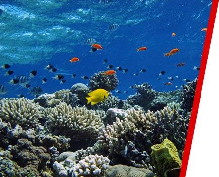 Marine & Underwater Services